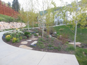 creek and flowers, Park City