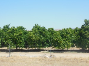 farming. Fruit or nuts, drove too fast to notice but did see oranges laying on the ground frequently