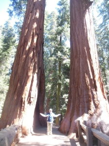 Chris and the Twin Sequoias