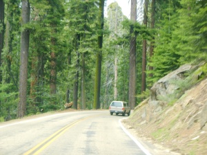 beginning the drive on Kings Canyon Scenic Byway