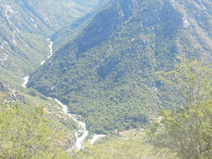 Kings River from above, two forks joining together