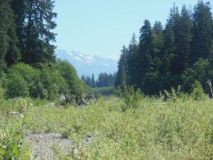 View of Olympic mountains from Hoh river valley
