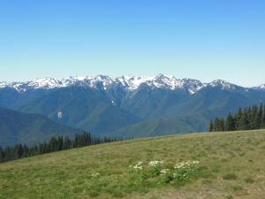 Olympic mountains from Hurricane Ridge