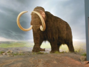 Wooly mammoth at Royal BC Museum