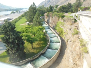 Fish ladders at Rocky Reach dam