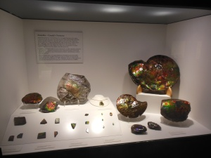 Glenbow museum minerals-this is  ammolite local to Alberta