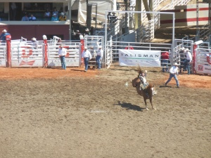 bronco riding at Stampede