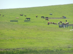 Alberta ranching land
