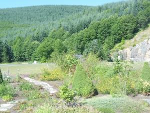 Weyerhauser regrowth area