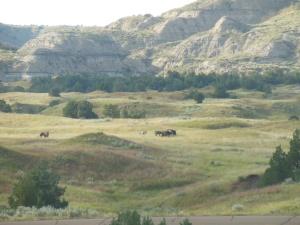 Wild horses in the park