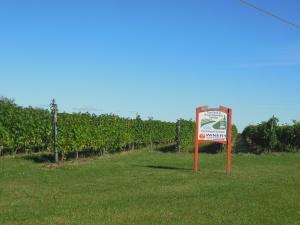 Vineyards on Old Mission Peninsula
