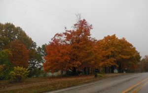 A bright tree along the highway in Arkansas