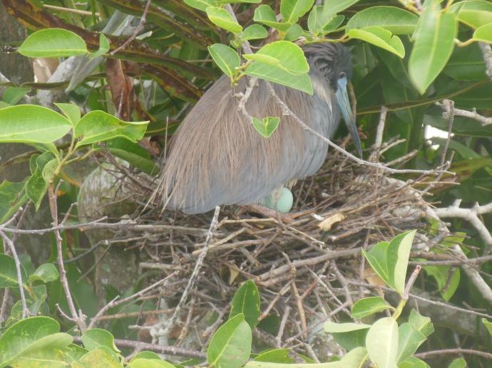 Wakodahatchee wetlands-note bird egg