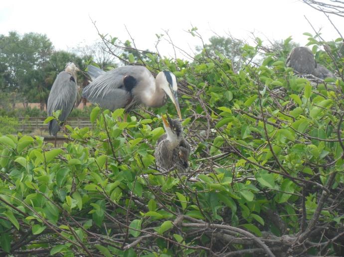 Wakodahatchee wetlands