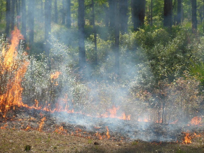 prescribed burn under way