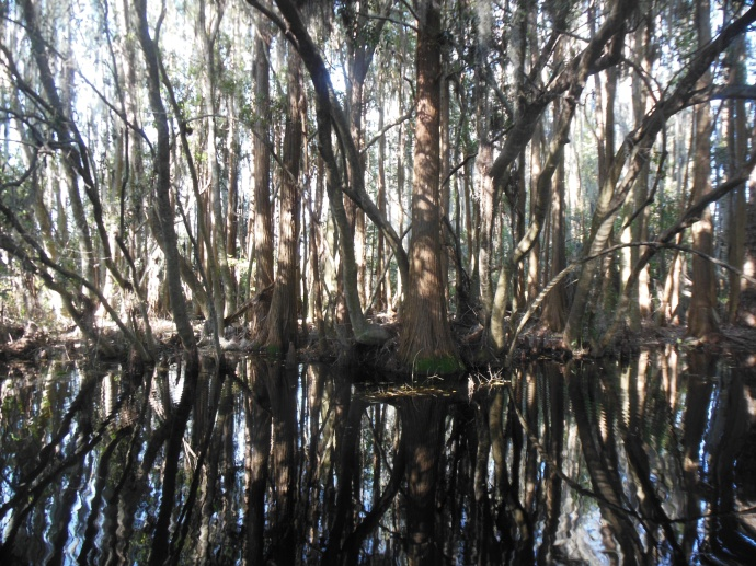 thicket along the boat reide