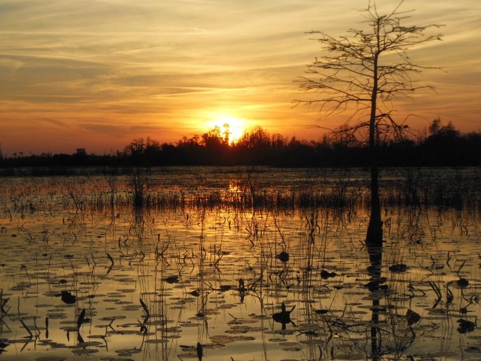 sunset on the swamp