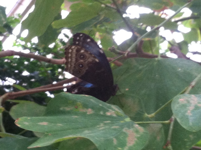 Butterfly at Callaway Gardens