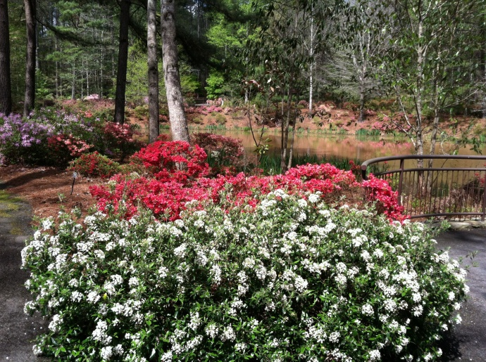 azaleas at Callaway Gardens