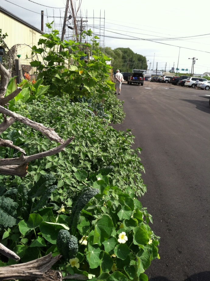 Vegetables growing in the Duluth Grill parking lot