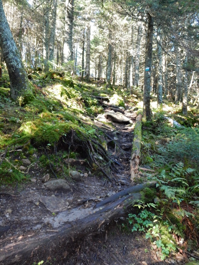 The 360 trail on Mont Tremblant