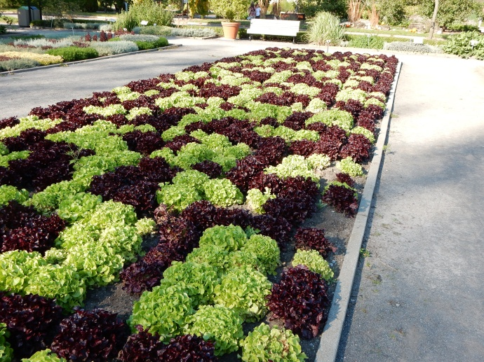 Montreal Botanical Gardens: What you can do with just leaf and red lettuce