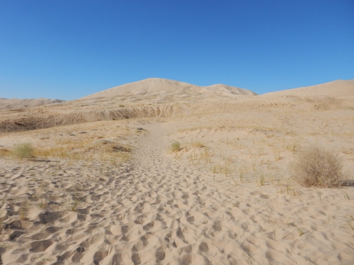 our trail at Kelso Dunes