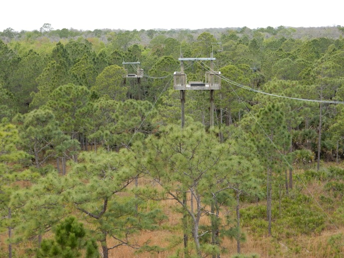 Part of the  zip line course at Forever Florida