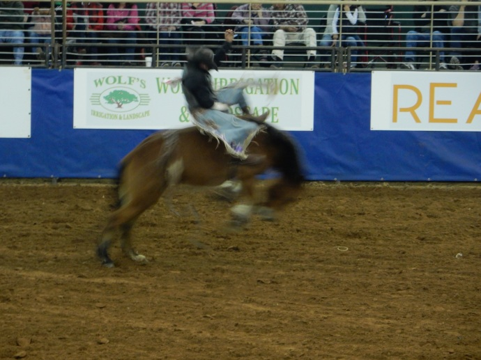 At the Kissimmee Silver Spur rodeo