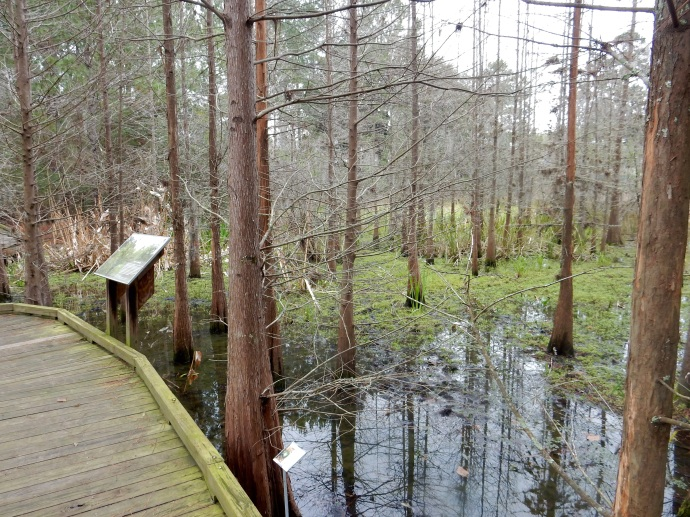a part of the 60 acre nature area at the university of Florida campus