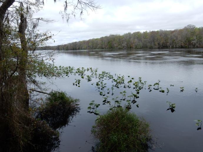 The Suwanee River