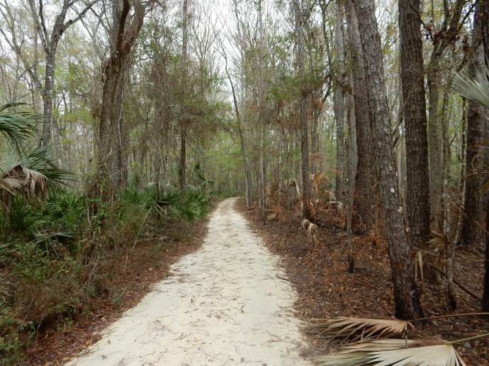 Nature trail at Lower Suwanee with recent  prescribed burn area at right