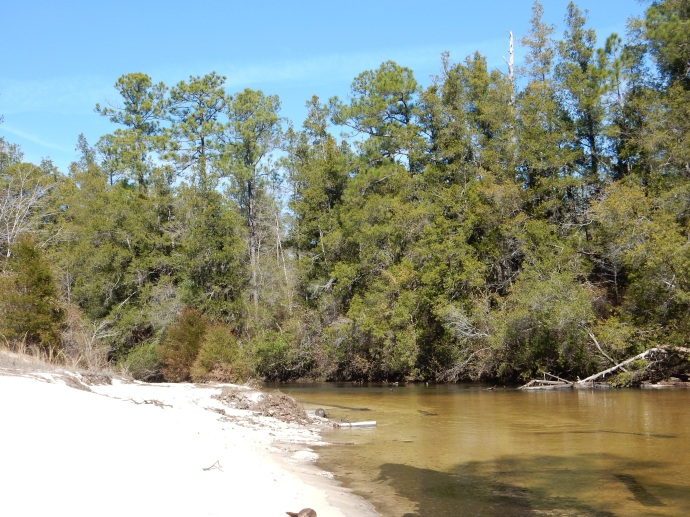 Coldwater Creek-sandy beach, turn, and overhanging branch