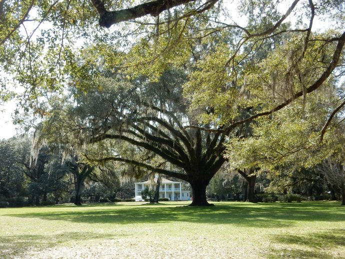 The Mansion at Eden Gardens State Park with 600 year old Live Oak in foreground