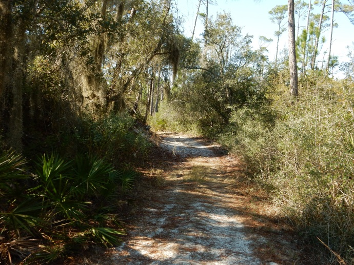 Along the Deer Track Trail in Topsail