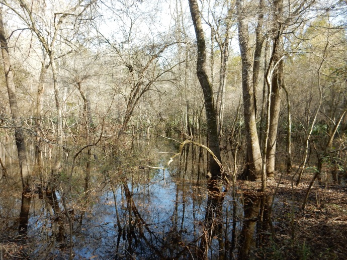 Along the Tallahassee to St. Marks bike trail