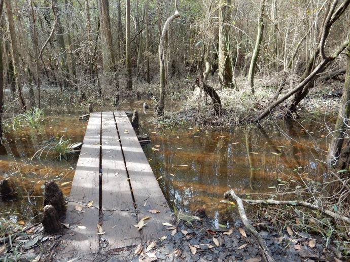 Blackwater River State Park trail