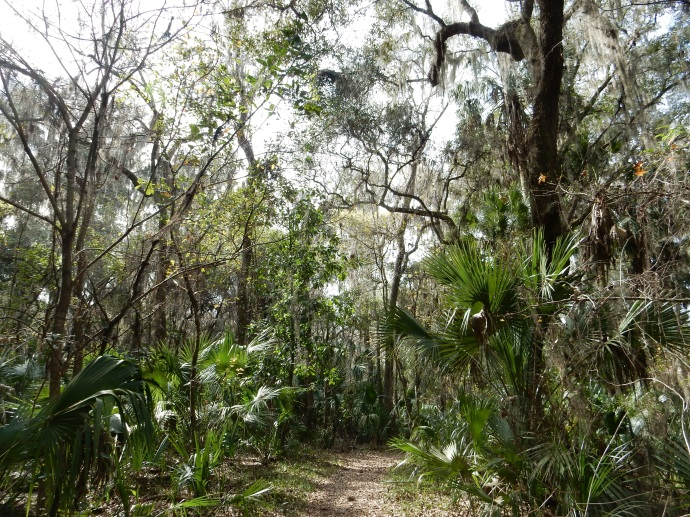 Part of a trail at Paynes Prairie Preserve State Park