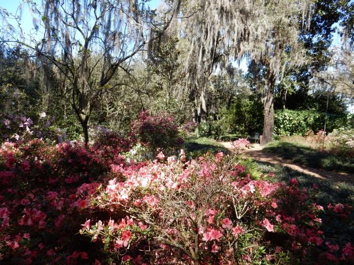 Bok Gardens, Lake Wales FL
