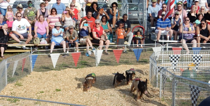 Pig racing at the Florida Strawberry Festival in Plant City FL