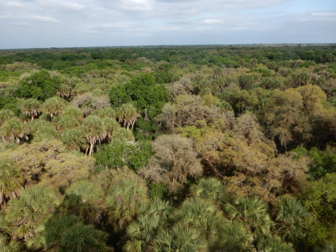 View from the observation tower at Myakka River State Park
