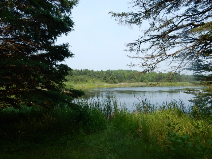 Wildlife pond at Moose Lake State Park