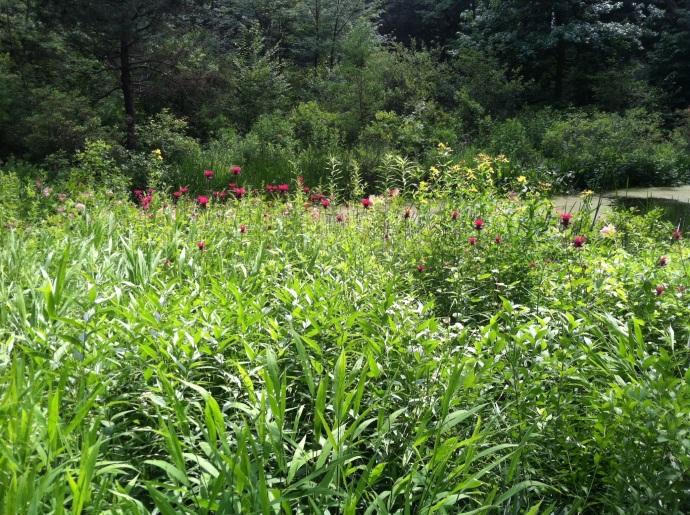 Garden in the Woods, Framingham MA