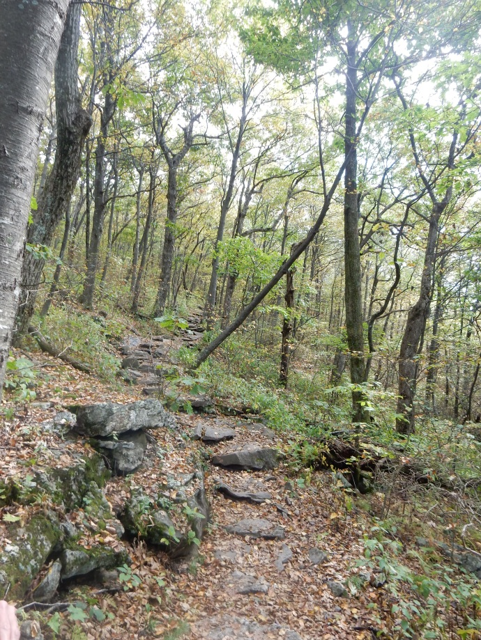 the trail to Springer Mountain