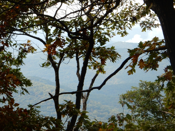 The view  through the trees on the trail to Springer Mountain