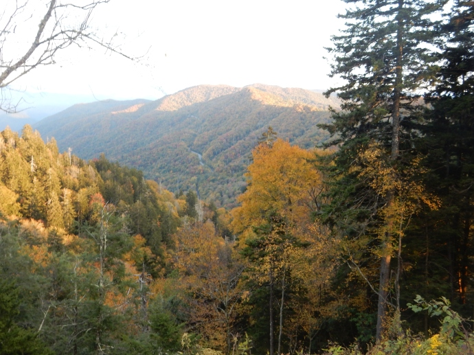 View from Newfound Gap Road