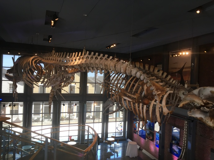 Whale skeleton at New Bedford Whaling museum