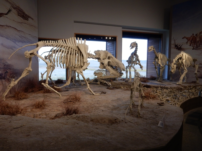 Models of the mammals whose fossils were found at Agate Fossil Beds-models cast from actual bones now in possession of universities