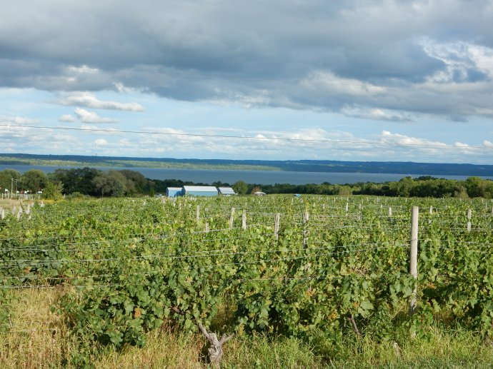 One of the numerous vineyards in the Finger Lakes region
