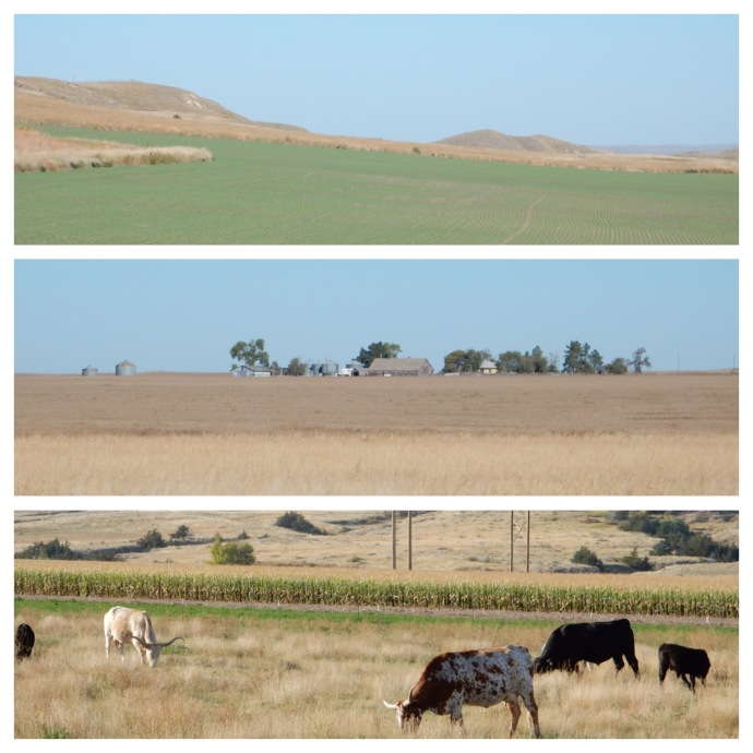 Flat land in the center with the start of hills on top and grazing cattle at the bottom